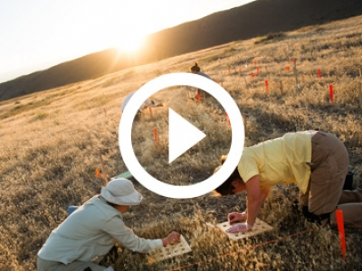 Cheatgrass Research